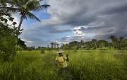ARTIBONITE, HAITI-NOV, 2014: Fanie cultive le riz en Artibonite. (Photo by veronique de Viguerie/Reportage by getty images).