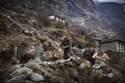 BEDING, NEPAl-APRIL, 2015: Traditionnellement les sherpas sont éleveurs de Yaks et cultivateurs de patates. Beding 3700m(Picture by Veronique de Viguerie/Reportage by Getty Images)