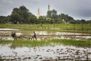 Birmanie- Juin, 2015: Rizières à la sortie de Rangoon avec au loin un temple boudhiste. (Picture by Veronique de Viguerie/Reportage by Getty Images)