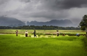 Hpa An, Birmanie- Juin, 2015: Repiquage du riz dans les rizieres.  (Picture by Veronique de Viguerie/Reportage by Getty Images)