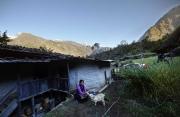 SIMIGAON, NEPAl-APRIL, 2015: Chiring Diki Sherpa, possede quelques chèvres et un champs de blé. (Picture by Veronique de Viguerie/Reportage by Getty Images)