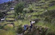 SIMIGAON, NEPAl-APRIL, 2015: Les cultures en terrasse de blé au village de Simigaon à 2000m.(Picture by Veronique de Viguerie/Reportage by Getty Images)