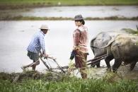 Birmanie- Juin, 2015: Rizières à la sortie de Rangoon. (Picture by Veronique de Viguerie/Reportage by Getty Images)