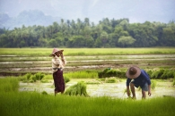 Hpa An, Birmanie- Juin, 2015: Rizières. (Picture by Veronique de Viguerie/Reportage by Getty Images)