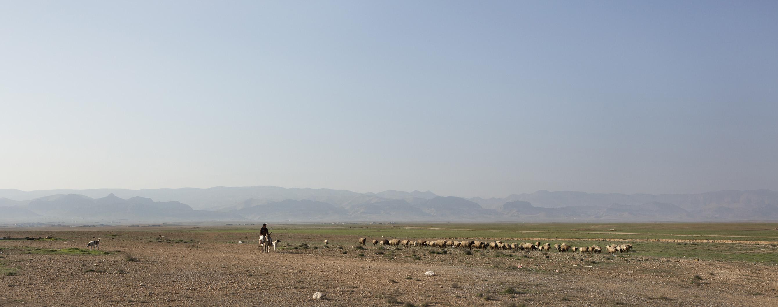 SINJAR, KURDISTAN, IRAQ- FEBRUARY, 2016: Les Yezidis sont des agriculteurs et des fermiers.(picture by Veronique de Viguerie/ Reportage by Getty Images )